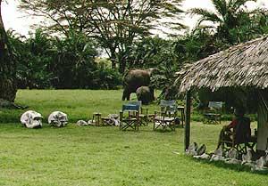 elephant watching